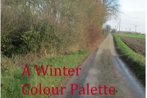 collage winter colour palette